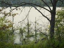 Lago dell'alta marea di fonte Fotografia Stock Libera da Diritti