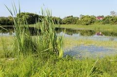 Lago demasiado grande para su edad con la lenteja de agua Imagen de archivo