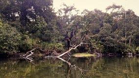Lago dentro la foresta Fotografia Stock