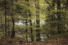 Lago dentro la foresta in primavera Fogliame fertile Tronchi di albero, paesaggio di legno in montagne Foresta nera, Germania immagini stock
