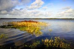 Lago Derravaragh Immagini Stock