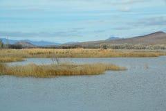 Lago desert Fotografia Stock Libera da Diritti