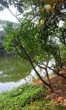 Lago Dhanmondi Fotografia Stock