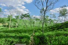 Lago di acqua all'interno del giardino di tè Immagine Stock Libera da Diritti