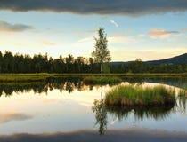 Lago di autunno di alba Rispecchi il livello dell'acqua in foresta misteriosa, giovane albero di betulla sull'isola nel mezzo Fotografia Stock Libera da Diritti