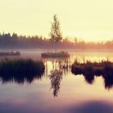 Lago di autunno di primo mattino in foresta vaga, giovane albero sull'isola nel mezzo Erbe variopinte ed erba sulle isole, nuvole Fotografie Stock