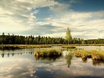 Lago di autunno di primo mattino in foresta vaga, giovane albero sull'isola nel mezzo Erbe variopinte ed erba sulle isole, nuvole Fotografie Stock Libere da Diritti