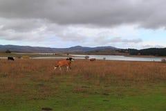 Lago di Cecita Sila Photo stock