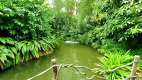 Lago di colore verde con le piante verdi fotografia stock