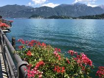 Lago di Como in Italy and Blooming Red Geranium Flowers ,Como Lake Background. Landscape of Lago di Como in Italy and Blooming Red Geranium Flowers ,Como Lake royalty free stock photography