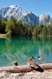 Lago di Fusine e monte Mangart mit Ente Lizenzfreie Stockbilder