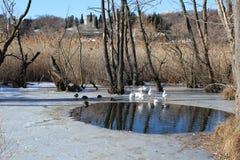Lago di Ghiaccio, Italy. Royalty Free Stock Image