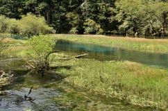 Lago di hai del cigno, valle di jiuzhai, porcellana Immagine Stock