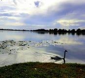 Lago di Mantova Fotografia Stock Libera da Diritti