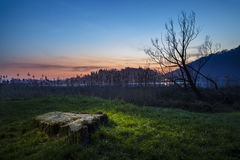 Lago di Segrino. Along a lake at evening, dead trees and vegetation royalty free stock photography
