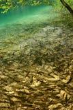 Lago di sogno fisherman in pieno dei pesci Immagine Stock