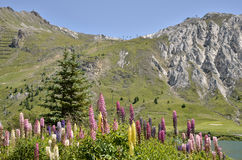 Lago di Tignes e dei fiori in Francia Fotografia Stock Libera da Diritti