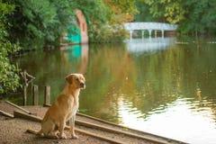 Lago di trascuratezza dog Fotografie Stock Libere da Diritti