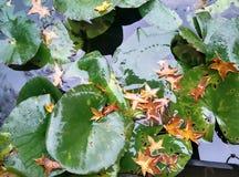 Lago do outono fotos de stock royalty free