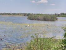 Lago do potheri de Srm fotografia de stock