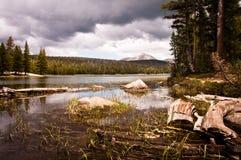 Lago dog fotos de archivo libres de regalías