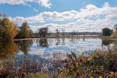 Lago dog preto no refúgio de Eagan Imagens de Stock