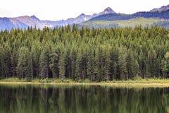 Lago dorato Fotografie Stock