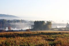 Lago dos cervos da névoa Fotografia de Stock Royalty Free