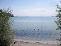 Lago dos patos Foto de Stock Royalty Free