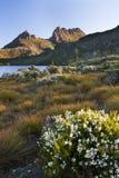 Lago dove das flores selvagens Fotografia de Stock Royalty Free