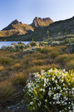 Lago dove de las flores salvajes fotografía de archivo libre de regalías