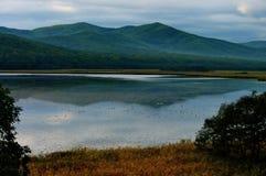 Lago duck immagine stock