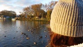 Lago duck Fotos de archivo
