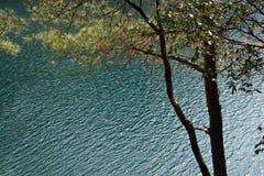 Lago e árvore Foto de Stock Royalty Free