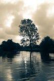 Lago e árvore Imagem de Stock Royalty Free