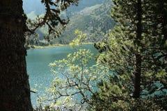 Lago e árvore em Pyrenees Foto de Stock Royalty Free