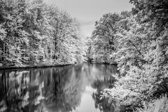 Lago e árvores infravermelhos em madeiras de Haia Foto de Stock