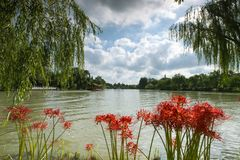 Lago e as flores do equinócio Imagens de Stock