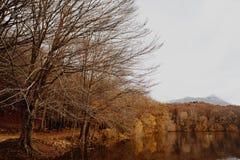 Lago e cacho em Autumn Forest fotos de stock royalty free