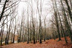 Lago e cacho em Autumn Forest foto de stock royalty free