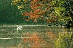 Lago e cigno Fotografia Stock Libera da Diritti