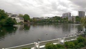 Lago e cisnes Stavanger Noruega fotos de stock royalty free
