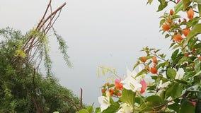 Lago e fiore Fotografia Stock