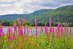 Lago e fiori Charming Immagine Stock Libera da Diritti