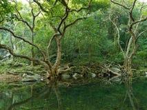 Lago e floresta Imagem de Stock Royalty Free