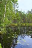 Lago e floresta landscape Imagens de Stock