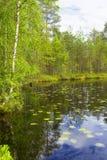 Lago e floresta landscape Fotografia de Stock Royalty Free