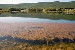 Lago e foresta Immagini Stock Libere da Diritti