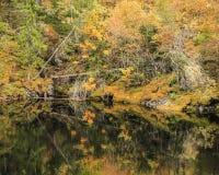 Lago e foresta Fotografia Stock