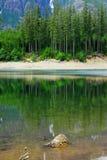 Lago e foresta Buttle Fotografie Stock Libere da Diritti